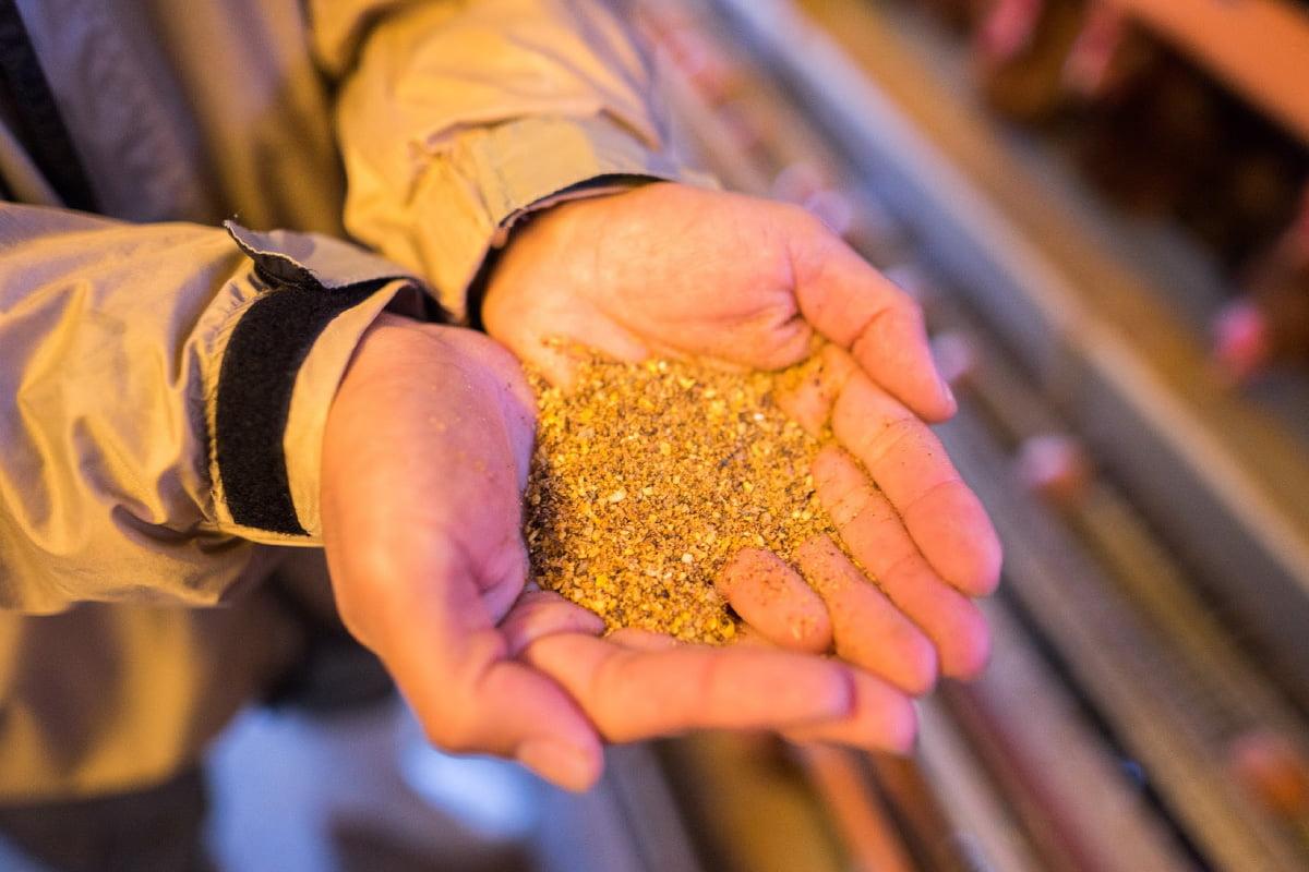 画像:稲刈りの様子